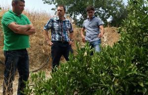 Visita a cultivos de la cooperativa Agrupa-El Valle de Lecrín.