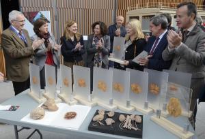Cortes de cerebro humano plastinados por el museo.