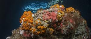 La belleza de los fondos marinos del litoral granadino.