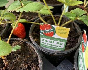 Planta de fresa para medir la calidad del aire.