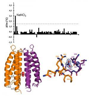 Estructura tridimensional del receptor McpN (izquierda) y el centro activo de reconocimiento del nitrato (derecha)