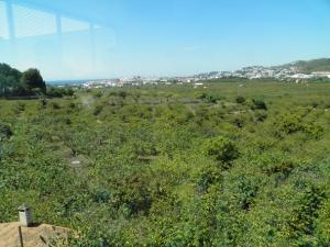 Campo de subtropicales en Almuñécar.