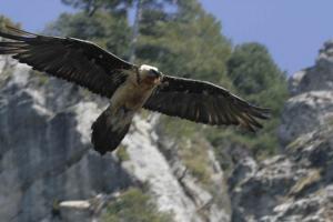 La Sierra de Castril es uno de los enclaves en los que se han liberado los ejemplares.