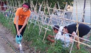 Voluntarios cultivan el huerto solidario de Madre Coraje.