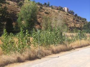 Terrenos propuestos por el PP, en el camino que conduce a la Fuente de la Bicha.