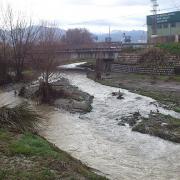 El río Monachil, el primero en verter sus aguas al Genil. Los patos no han querido perderse el espectáculo.