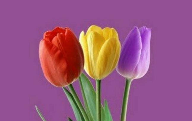 Flores que forman los colores de la bandera republicana.