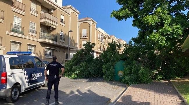 El árbol ha caído este domingo en la calle Madreselva, en el Barrio de las Angustias.