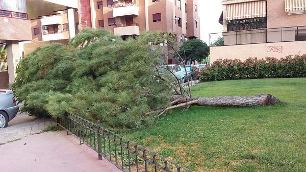 Tras los ejemplares que derribó el viento el pasado invierno, otro árbol cae en el jardín.