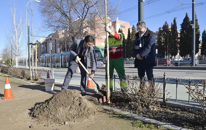 Cuenca echa tierra en la plantación de un árbol en bulevar Carlos V,