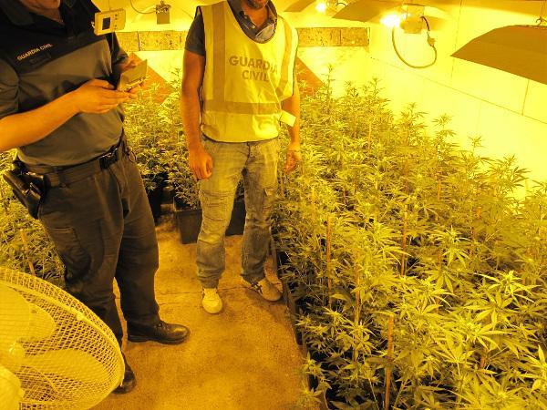 Una de las plantaciones de marihuana descubiertas.