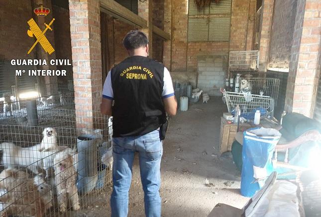 Un agente examina el criadero de perros, en un antiguo secadero.
