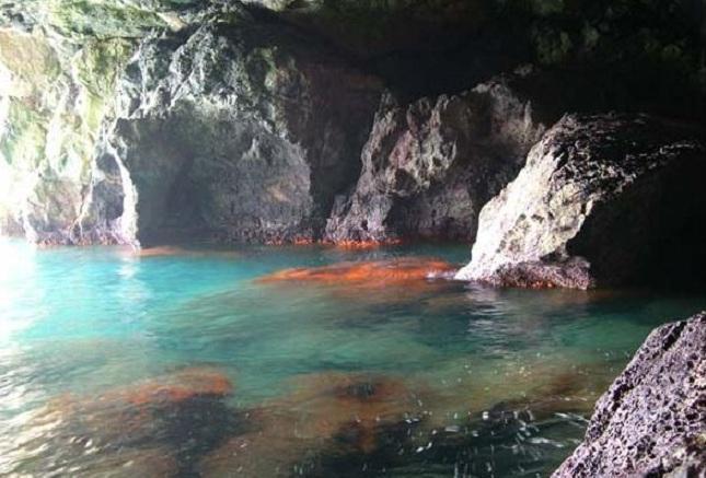 La Cueva de las Palomas alberga importantes poblaciones de coral naranja.