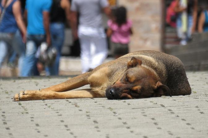 El abandono de perros aumenta durante el verano.