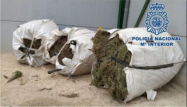 Sacos con planta aromáticas intervenidos por los agentes.