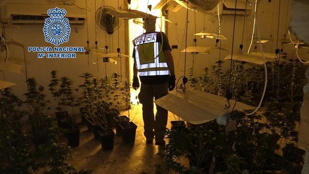 Un agente, en una de las plantaciones de Cijuela.