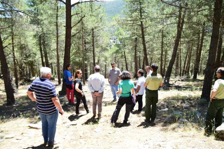 Visita a los trabajos en un bosque de Jérez del Marquesado.
