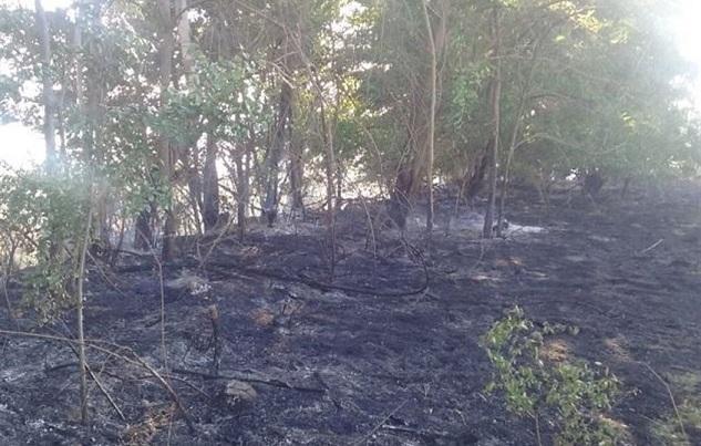 El fuego quemó vegetación de ribera.