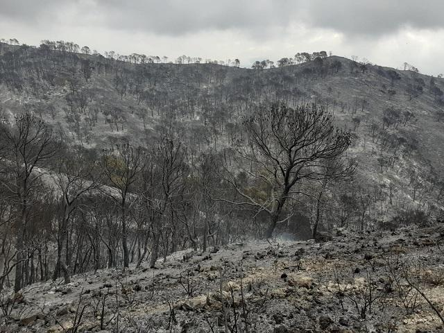 Desolador paisaje tras el fuego.