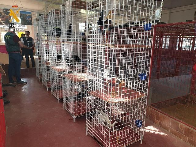 Jaulas para los gallos en el reñidero descubierto.