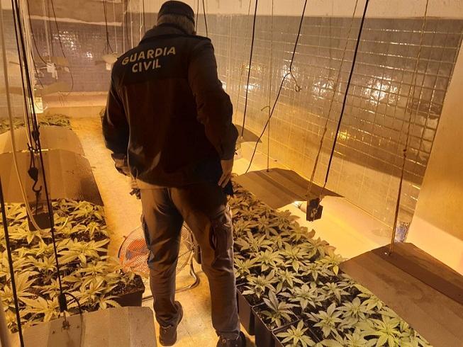 Un agente inspecciona uno de los cultivos.