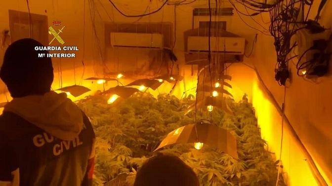 Una de las plantaciones descubiertas por la Guardia Civil.