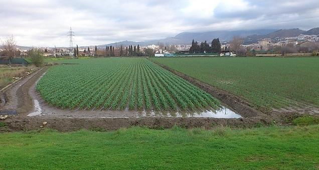 Cultivos en la Vega de Granada.