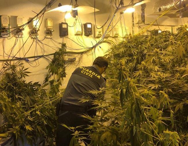 Uno de los cultivos de marihuana descubiertos en Pulianas.