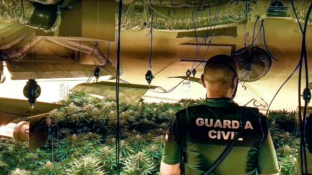 Un agente, en una de las plantaciones desmanteladas.