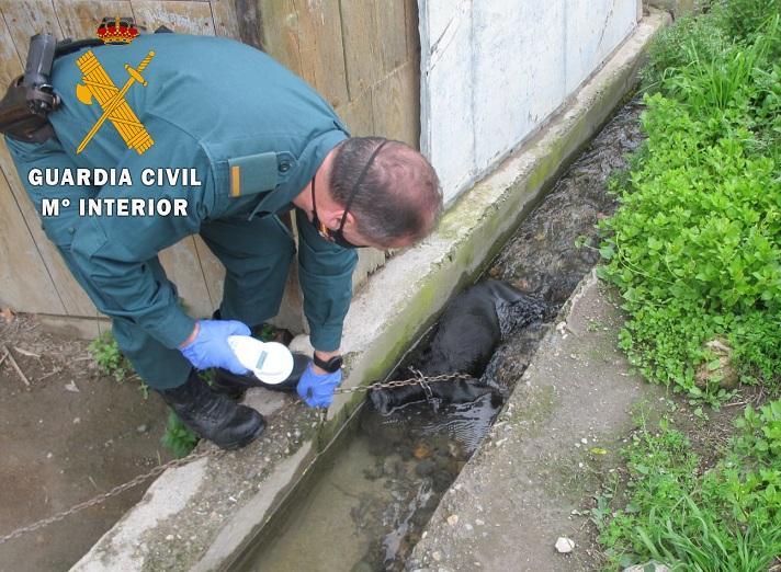 Un agente del Seprona, junto al cadáver del perro.