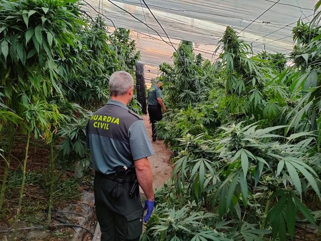 Explotación de marihuana amparada en un cultivo de cáñamo en Los Yesos.
