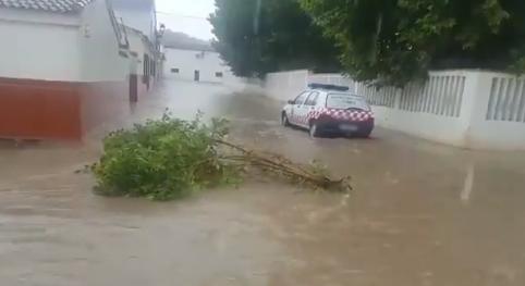 Rama arrastrada por el agua en una calle de Peñuelas.