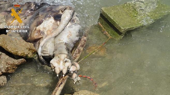 Al parecer, el perro fue arrojado vivo al pantano.