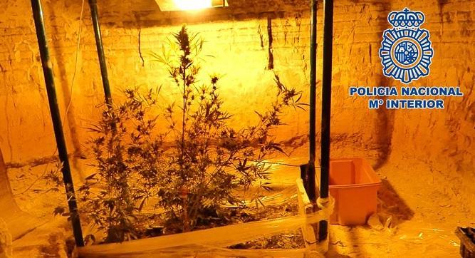 Plantación de marihuana que tenía el detenido en una oquedad de un cerro.