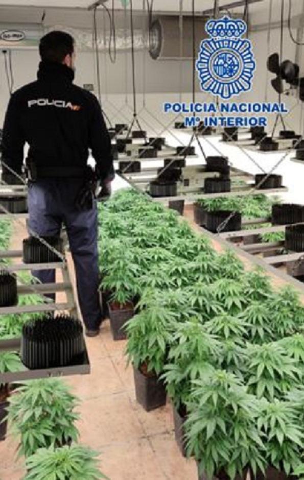 Un agente, en una plantación interior de marihuana.