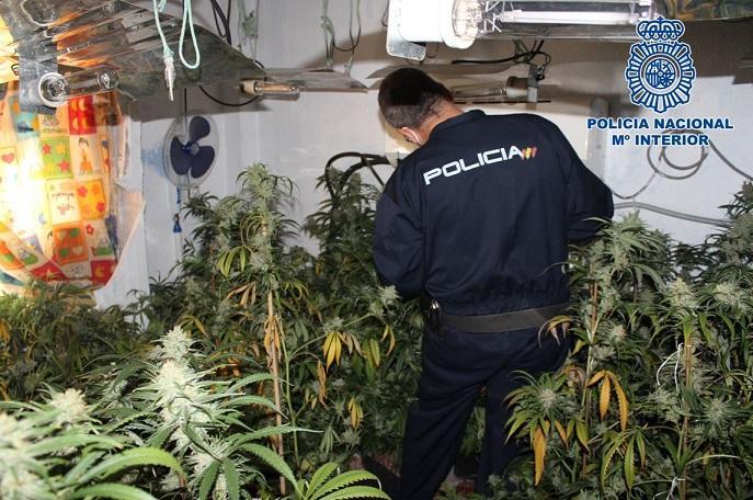 Un agente inspecciona la plantación encontrada.