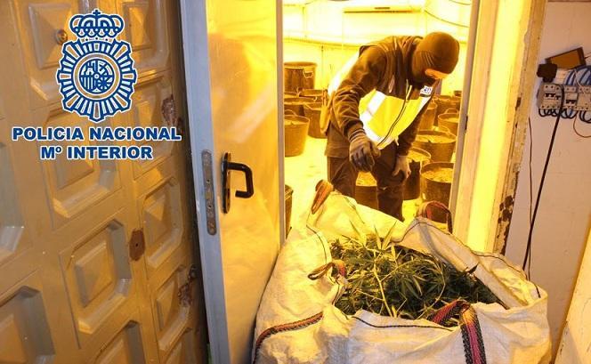 Uno de los sacos con plantas de marihuana requisados en los registros.