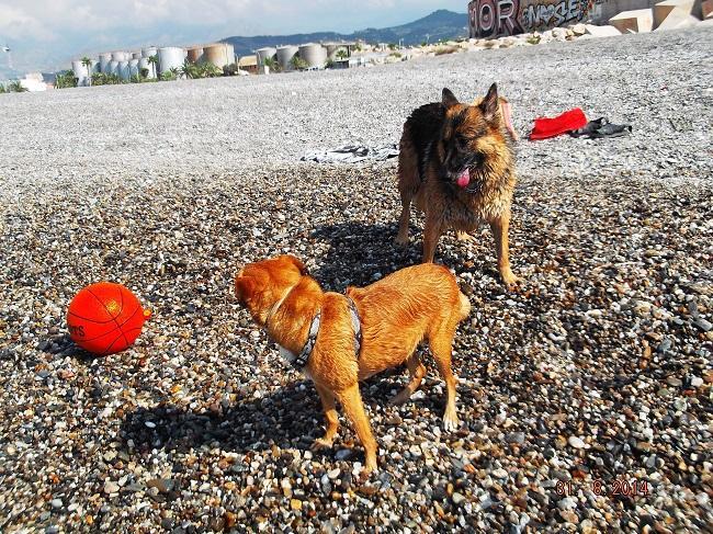 Foto de archivo de la playa para perros motrileña.