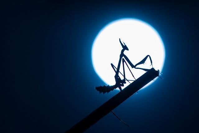 Foto ganadora del primer premio, titulada 'Atracción lunar'.