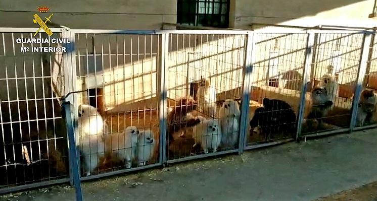 Algunas de las jaulas con perros del criadero de Santa Fe.