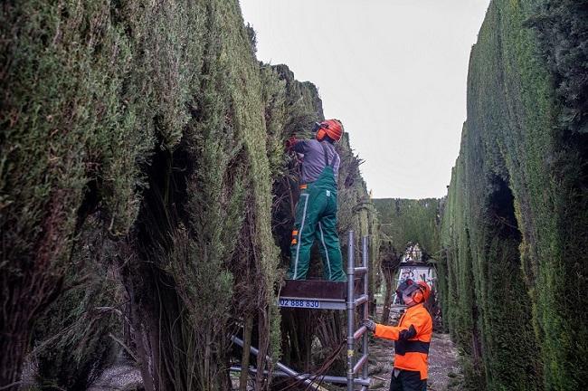 Trabajos en los Jardines de la Rosaleda o Jardines del Laberinto.