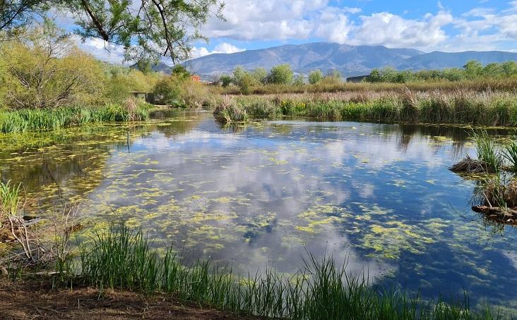 Bella imagen de una de las lagunas que conforman la Charca de Suárez, en Motril.