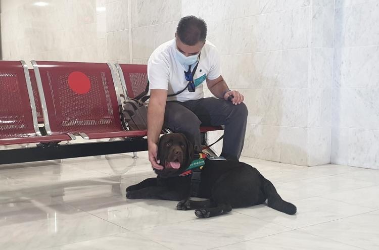 Aslan, perro de asistencia de Manuel Gavilán, un paciente con diabetes y riesgo de hipoglucemia, es el primer perro con tarjeta para entrar al Clínico.