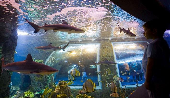 El acuario del Biodomo.