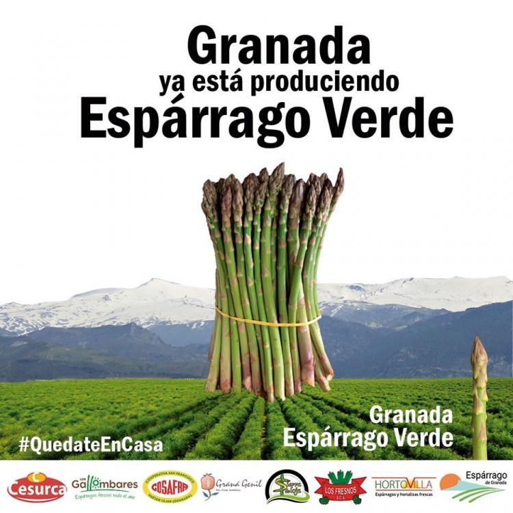 Cartel promocional del esparrago verde granadino.