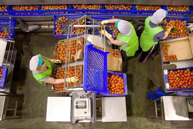 El sector hortofrutícola es de los menos afectados por la crisis.