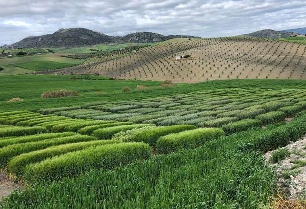 Cultivos controlados por la tecnología de Graniot.