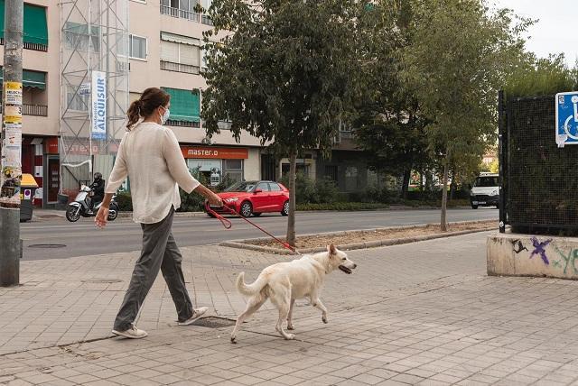 Una chica pasea a su perro por Fuentenueva.