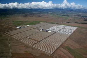 La investigación empezó tras una denuncia de la planta solar del Marquesado por el cultivo de tierras colindantes