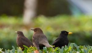 La captura de aves canoras está prohibida desde 2018.